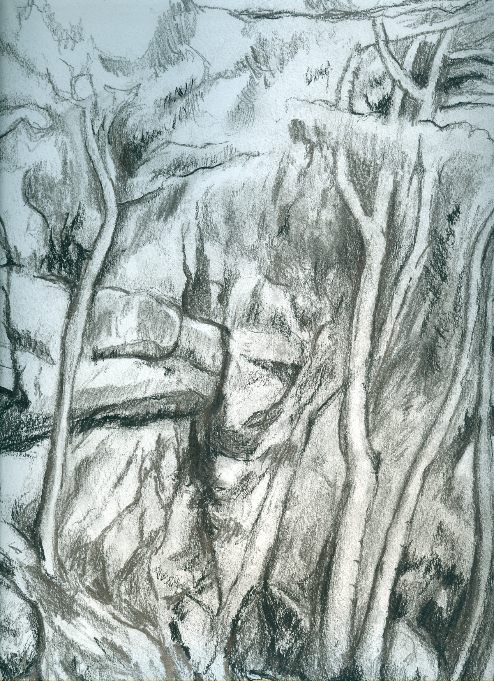 Home Decor Posters Cezanne Charcoal Drawings Pinterest