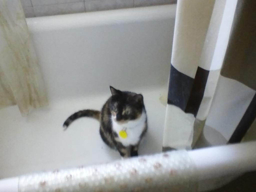 clo bathtub