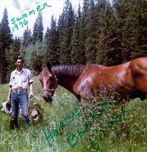 Townes horse